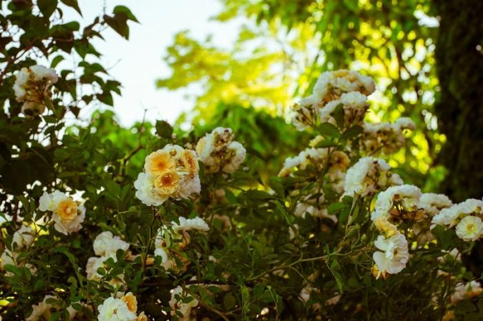 garden_amann_jun_15_5309